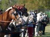 Szentgyörgyvári Horse Parade - 2012 július 21-22